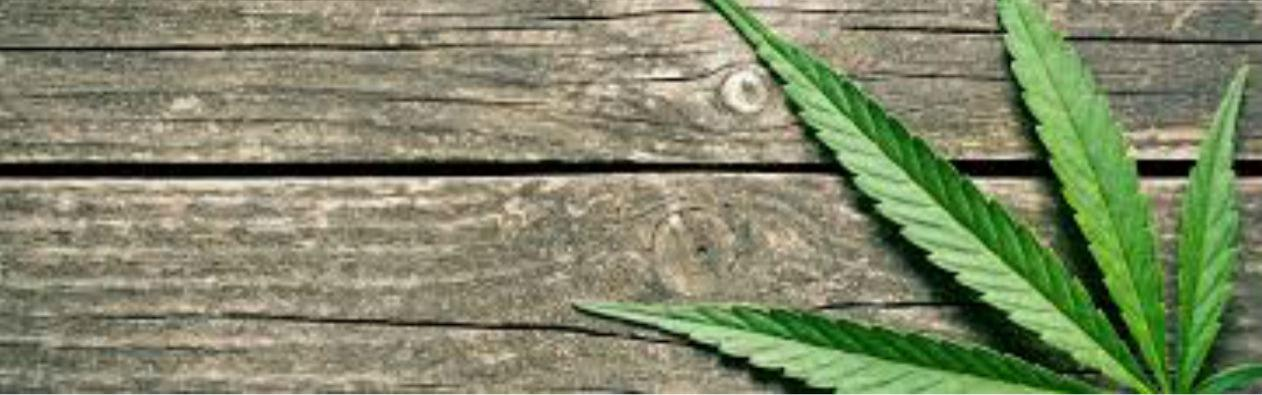 Cannabis leaf on wooden background.
